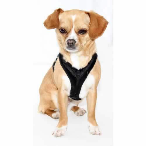 Perfect Fit Harness Tiny 1